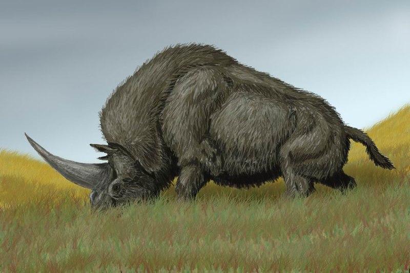 Томские учёные установили время вымирания «единорогов» - эласмотериев