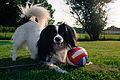 Elvira the dog (9275663996).jpg
