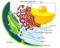 Endomembrane system ar.png