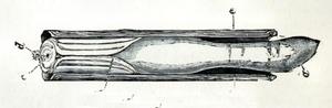 Pod razor - Ensis siliqua; a) foot b) mantle c) inhalant siphon d) exhalant siphon e) shell