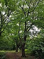 Epping Forest 20170727 111700 (49374795701).jpg