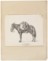 Equus hinnus - 1700-1880 - Print - Iconographia Zoologica - Special Collections University of Amsterdam - UBA01 IZ21700037.tif