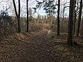 Esso-skogen 2.jpg