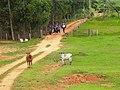 Estrada São Pedro do turvo SP - panoramio.jpg