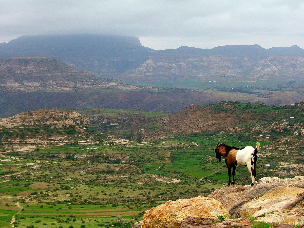 Deforestation in Ethiopia - Wikipedia