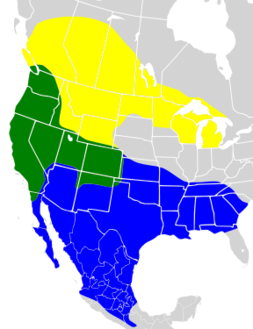 Euphagus cyanocephalus map.png