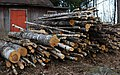Even more wood to saw (3431928360).jpg
