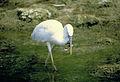 Everglades National Park EVER2723.jpg