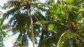 Evergreen Parassala.jpeg