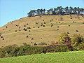 Föhren und Wacholder auf dem Ipf - panoramio.jpg