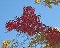 Fall Colors Northern NM (3975212331).jpg
