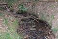 Fauerbach-Quelle auf 390 m.png