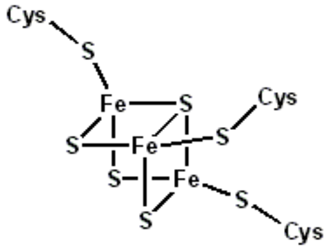 Ferredoxin - Structural representation of an Fe3S4 ferredoxin.