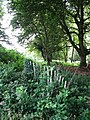 Fence at the edge of Little Wood - geograph.org.uk - 876109.jpg