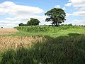Fields at Broom Hill - geograph.org.uk - 1425493.jpg