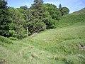 Fintry Wood - geograph.org.uk - 474697.jpg