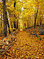 Flickr - Nicholas T - Loose-Leaf.jpg