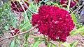 Flor Vermelha.jpg