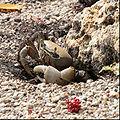 Florida Keys Crab.jpg