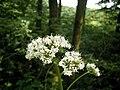 Flower-0498.JPG