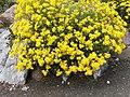 Flower.2097.JPG