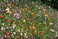 Flower Border 3 (5960724577).jpg