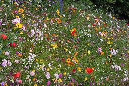 Annual plants annual flowers annuals winter flowers biennials flower border 3 5960724577 mightylinksfo
