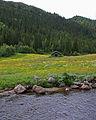 Flower meadow - 3 (2735534084).jpg