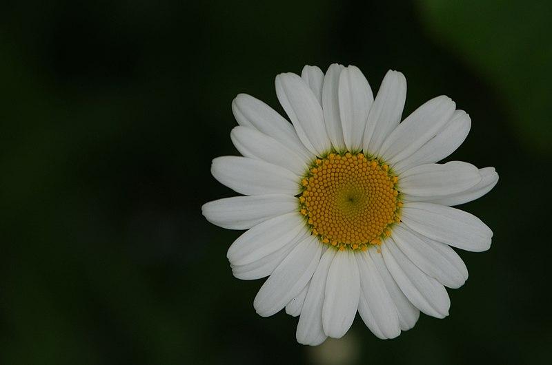 File:Flowers (9058182095).jpg