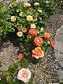 Flowers - panoramio (16).jpg