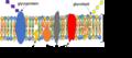 Fluid Mosaic Model.png