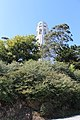 Foliage in front of Coit Tower, SF.jpg