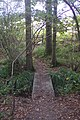 Footbridge near Hook Wood - geograph.org.uk - 1532117.jpg