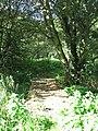 Footbridge over ditch - geograph.org.uk - 1493089.jpg