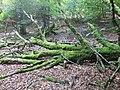 Forêt d'Esnazu 1.jpg
