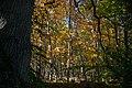 Forêt de Rambouillet — automne 2018 (11).jpg