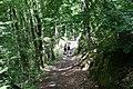 Forest @ Roc de Chère @ Talloires (34804359884).jpg