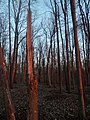 Forest - Guelph 03.jpg