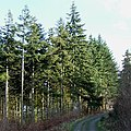 Forest Road, Lodge Hill, Shropshire - geograph.org.uk - 631986.jpg