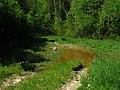 Forest road near Minsk - panoramio.jpg