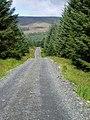 Forest track near Darnaw, Forrest Estate. - geograph.org.uk - 526717.jpg