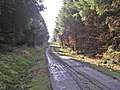 Forestry track - geograph.org.uk - 792757.jpg