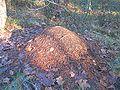 Formica rufa nest.jpg