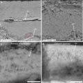 Fossil-AvimaiaSchweitzerae-EggCuticle-Shell-Membrane.png