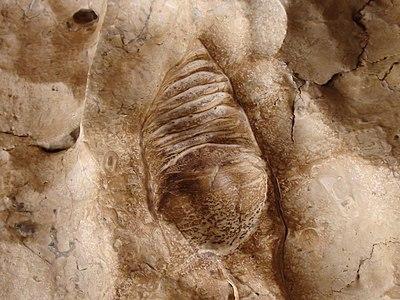 Fossil - The Kimberley.jpg