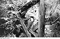 Fotothek df rp-e 0380008 Hochkirch-Sornßig. Ehem. Mühle, in der zusammengebrochenen Mühle.jpg