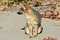 Fox (29451937836).jpg