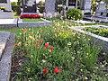 Friedhof Groß-Jedlersdorf Biodiversität sl9.jpg