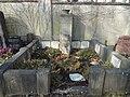 Friedhof friedenau 2018-03-24 (15).jpg