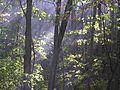 Fruška gora - igra svetla, senki i dima.jpg